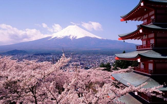 Tokyo-Fuji-Mountain-and-Sakura-Flower-HD-Wallpaper-Desktop[1]